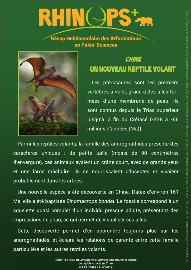 nouveau reptile volant