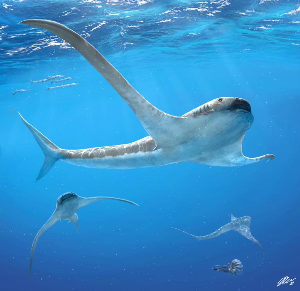 Reconstitution d'Aquilolamna milarcae dans les mers du Crétacé  - Créditimage : O. Sanisidro.